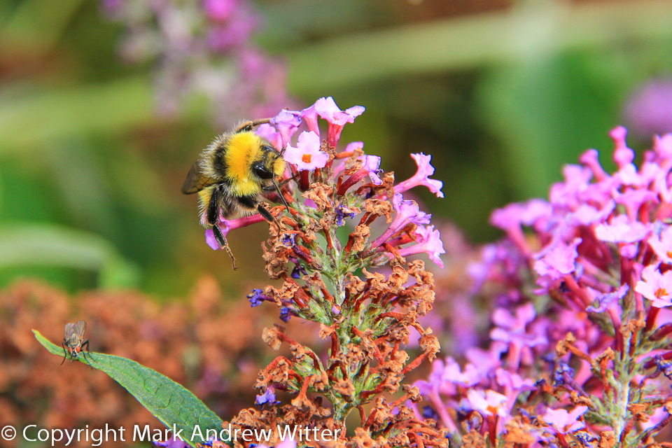 Bee and Fly on flowers