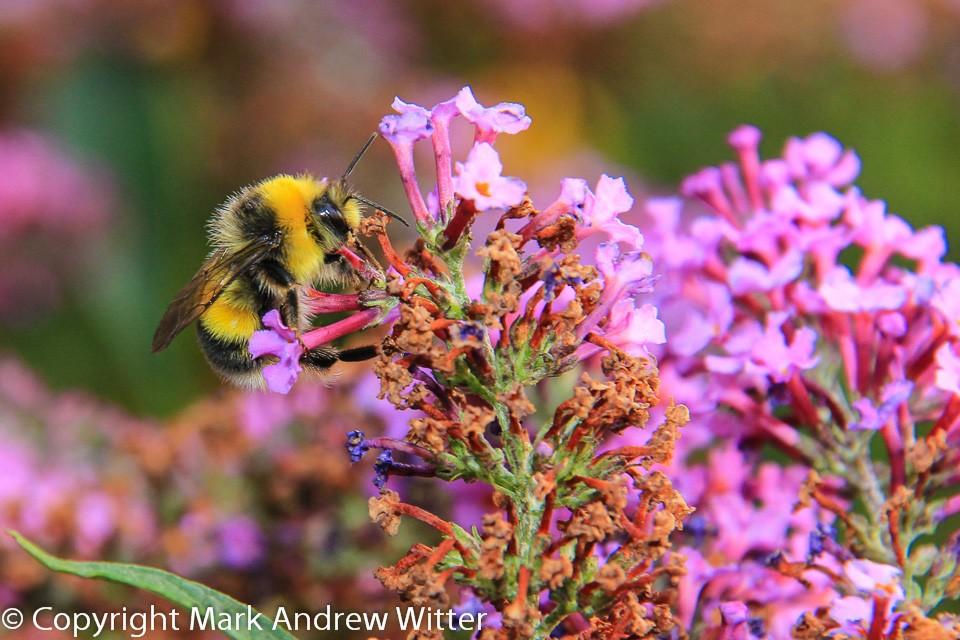 bee in summer on flower