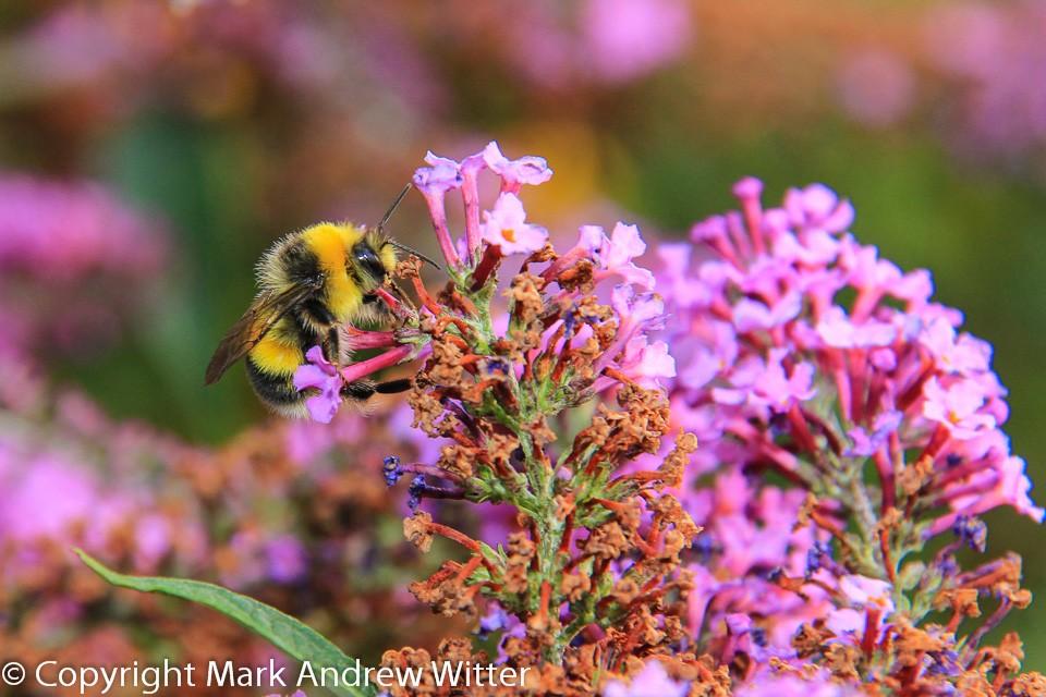 bee in garden on flower