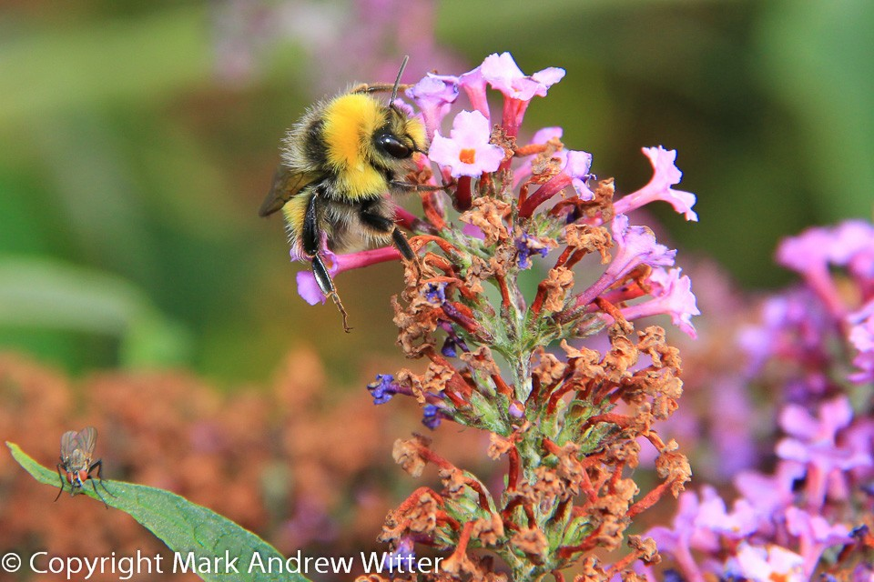 Close up of Bee and fly on flowers